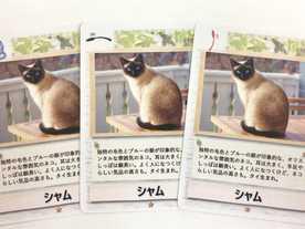 ネコじゃらしの画像