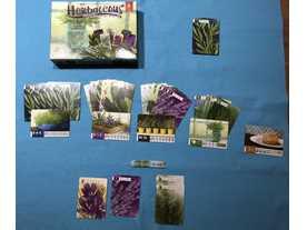 ハーベイシャス(Herbaceous)