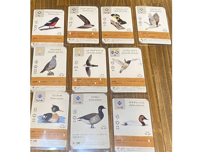 ウイングスパン:プロモーションカード(Wingspan: Swift-Start Promo Pack)