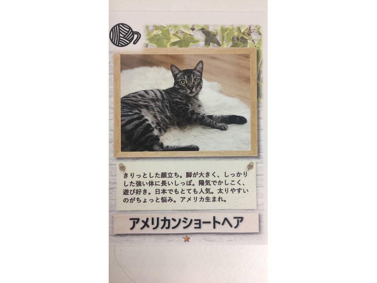 ネコじゃらし(Neko Jarashi)の画像 #42286 Kenさん