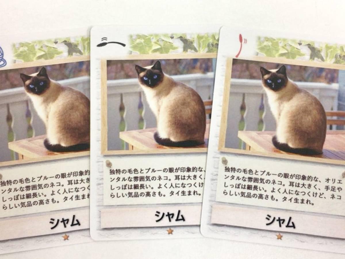 ネコじゃらし(Neko Jarashi)の画像 #42281 Kenさん